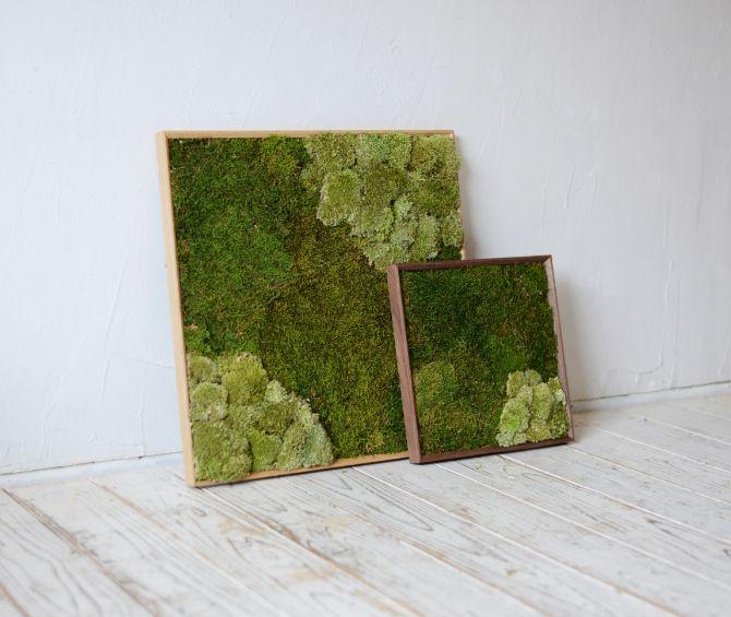 MOSS FRAME - 壁を彩る緑 -