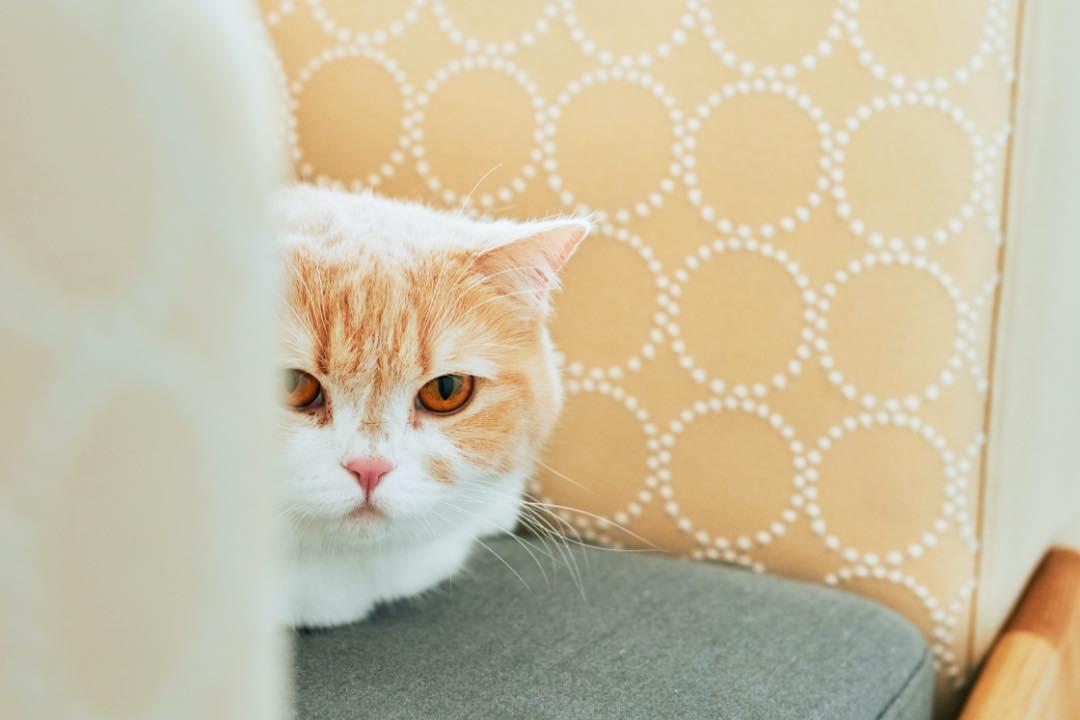 luu sofa 座り心地